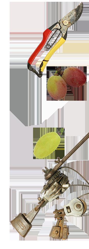 橘萄園(きっとうえん)愛知安芸クイーン